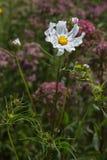 Kwiaty w wiejskim lecie uprawiają ogródek w niemieckiej wsi fotografia royalty free