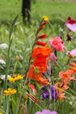 Kwiaty w wiejskim lecie uprawiają ogródek w niemieckiej wsi fotografia stock