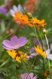 Kwiaty w wiejskim lecie uprawiają ogródek w niemieckiej wsi obraz royalty free