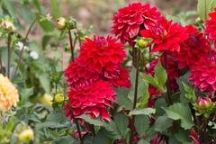 Kwiaty w wiejskim lecie uprawiają ogródek w niemieckiej wsi obrazy stock