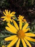 Kwiaty w wiosna zdjęcia stock