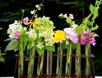 Kwiaty w wodzie Zdjęcie Royalty Free