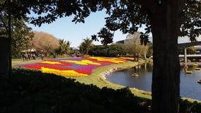 Kwiaty w wodzie Zdjęcia Stock