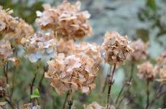 Kwiaty w zimie Zdjęcie Stock