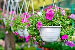 Kwiaty w zwisłych flowerpots Zdjęcie Royalty Free