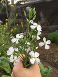 Kwiaty obrazy royalty free
