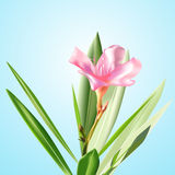 kwiaty wektora zdjęcia royalty free