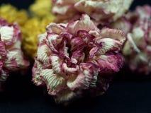 kwiaty więdnący Zdjęcia Royalty Free