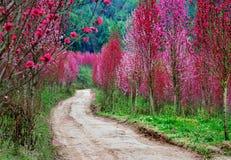 Kwiaty wiejskie drogi Zdjęcia Royalty Free
