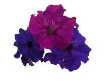 kwiaty wielo- trzy Zdjęcia Royalty Free