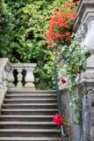 Kwiaty willa Carlotta na Jeziornym Como Obrazy Royalty Free