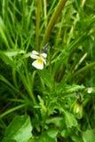 Kwiaty wiosna Zdjęcia Stock