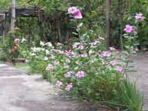 Kwiaty wokoło cementu Zdjęcie Stock