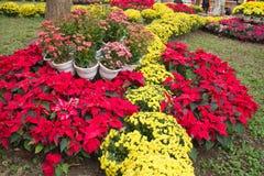 Kwiaty wokoło Hoan Kiem jeziora Fotografia Stock
