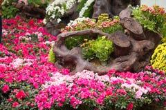 Kwiaty wokoło Hoan Kiem jeziora Zdjęcia Royalty Free