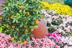 Kwiaty wokoło Hoan Kiem jeziora Obrazy Stock