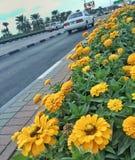 Kwiaty wykładający up na ulicie Obraz Stock