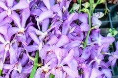 Kwiaty wykładali kolorowego brogującego Obraz Stock