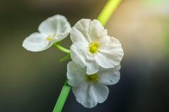 Kwiaty wykładali kolorowego brogującego Zdjęcie Stock