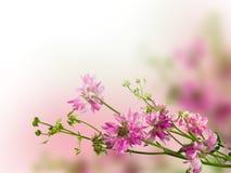 kwiaty wzrastali Fotografia Stock