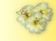 kwiaty wzrosły o trzy żółte Obrazy Stock