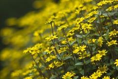 Kwiaty yellow kwiaty zdjęcia stock