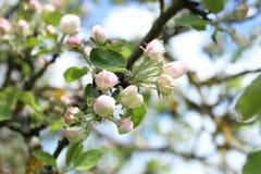 kwiaty z drzewa Zdjęcia Royalty Free