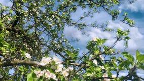 kwiaty z drzewa zdjęcie wideo