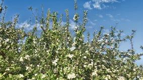 kwiaty z drzewa zbiory