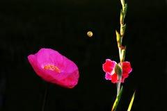 Kwiaty z księżyc w nocy Obrazy Royalty Free