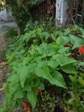 Kwiaty z liść gałąź obok ogrodzenia fotografia royalty free