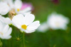 Kwiaty z ostrości Obrazy Stock