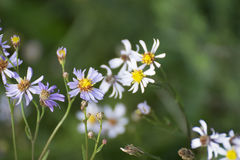 Kwiaty z rzędu Obraz Stock
