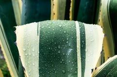 Kwiaty z wodą w makro- Obraz Stock