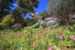 Kwiaty zasadzają i drzewo w wiośnie Zdjęcie Stock