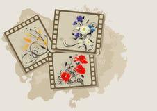 kwiaty zdjęcia lata roczne royalty ilustracja