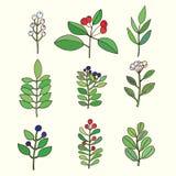 kwieciści dekoracyjni elementy dużo ustawiają Kolorowa kwiecista kolekcja z liśćmi i kwiatami Obrazy Stock