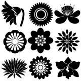 Kwieciści projekty w czarnych kolorach ilustracja wektor