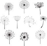 Kwieciści elementy z dandelions dla projekta Zdjęcia Royalty Free