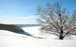 kwiecień piękny nizhny novgorod śniegu drzewo Zdjęcie Stock