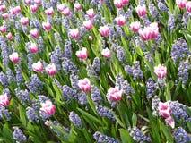 Kwiecień farby Holandia 8 Fotografia Royalty Free