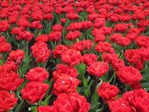 Kwiecień farby Holandia 4 Obrazy Stock