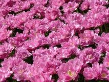 Kwiecień farby Holandia 15 Zdjęcie Royalty Free