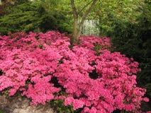 Kwiecień farby Holandia 3 Zdjęcie Royalty Free