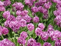 Kwiecień farby Holandia 12 Zdjęcie Stock