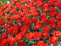 Kwiecień farby Holandia 18 Obraz Royalty Free