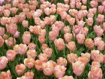 Kwiecień farby Holandia 13 Obrazy Stock