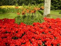 Kwiecień farby Holandia 11 Fotografia Stock