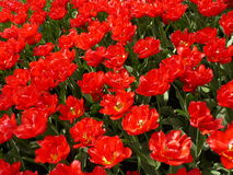Kwiecień farby Holandia 16 Zdjęcia Royalty Free