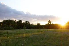 Kwiecista łąka przy zmierzchem Obraz Stock